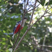 img_2313-bird