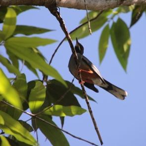 img_2314-bird