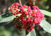 img_2316-berries