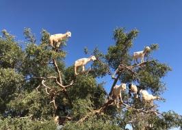 20170307_103616710_iOS-goats