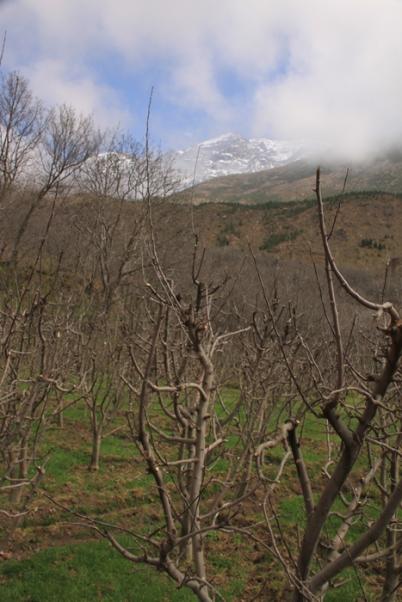 IMG_2435-apple-trees