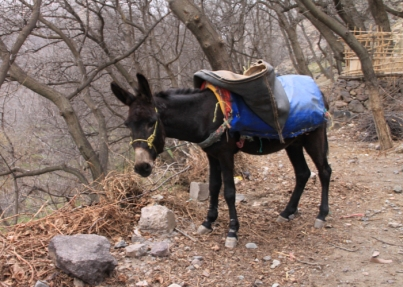 IMG_2447-mule