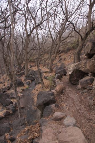 IMG_2466-trail
