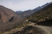 IMG_2529-trail