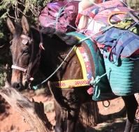 IMG_2725-mule