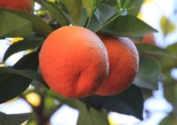 IMG_2797-orange