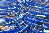 IMG_2878-boats