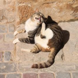 IMG_2915-cat