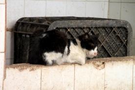 IMG_2986-cat