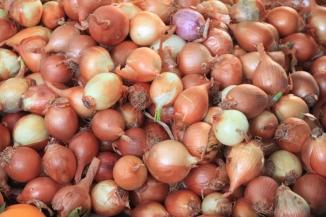 IMG_2992-onion