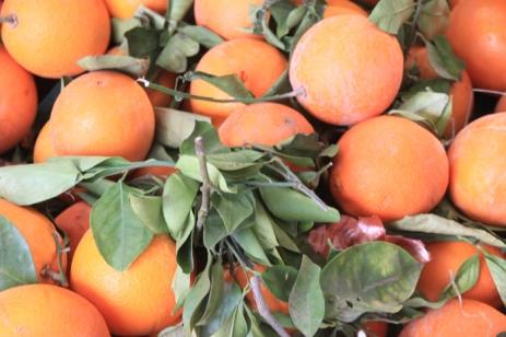 IMG_2993-orange