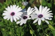 IMG_3000-flower