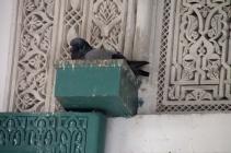 IMG_3016-pigeon