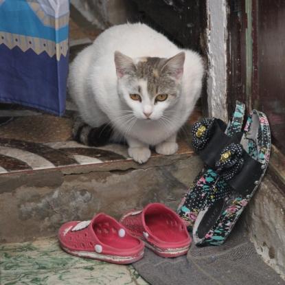 IMG_3096-cat