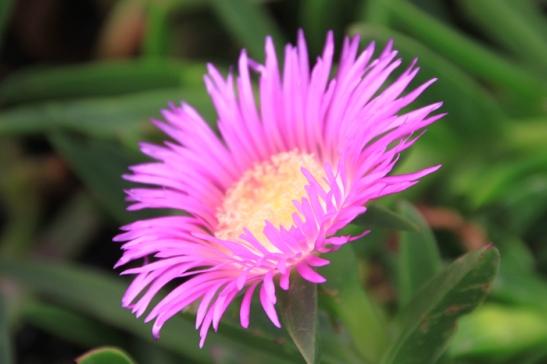 IMG_3134-flower