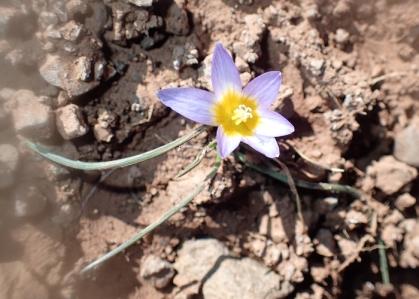 P3052301-flower