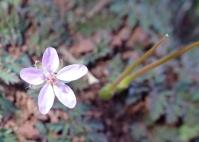 P3052302-flower