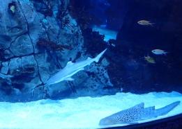 P3102318-aquarium