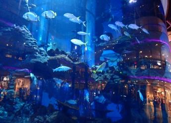 P3102321-aquarium