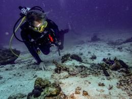 rootie looking at mantis shrimp