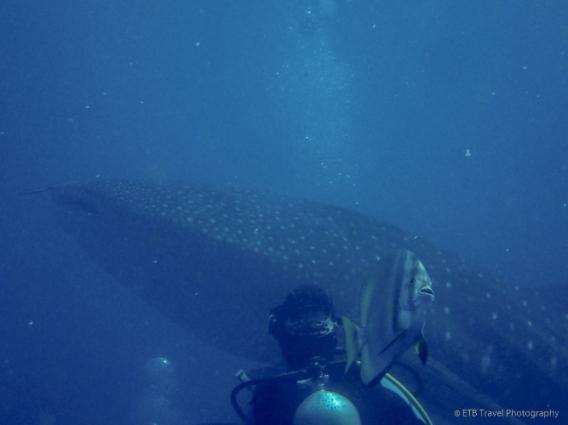Jo and a whale shark