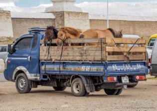 horse transportation