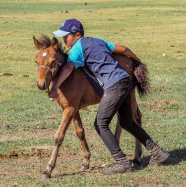 leading foal to tie-down