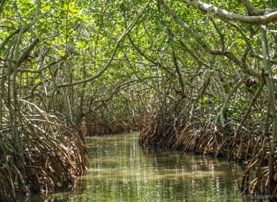 back through the mangroves