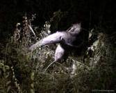 etbtravelphotographyIMG_4011 (1)-